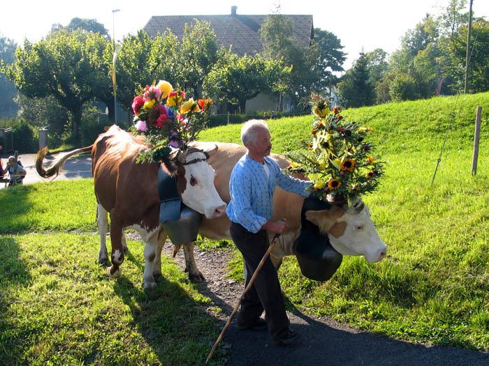 連製作起司的原料供給者~牛牛本身也到現場摟! 戴上美麗的花冠,感謝牛牛們的辛苦,我們才有好吃的起司~(鞠躬)