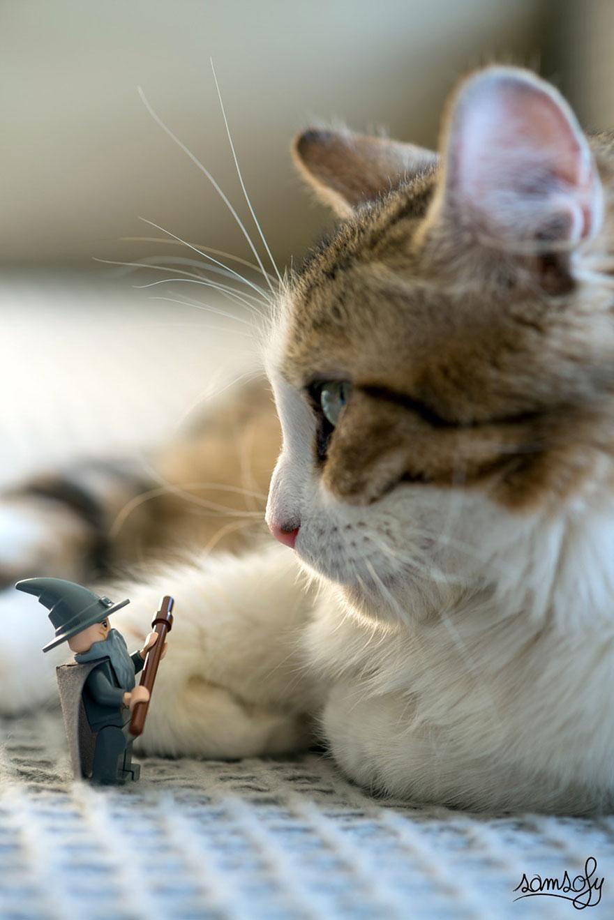 哈哈~對抗大貓的巫師~