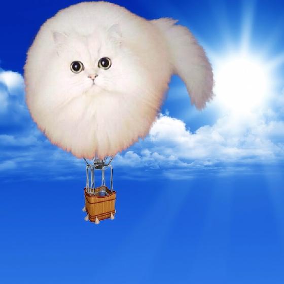 超萌的貓貓熱氣球,好想搭!