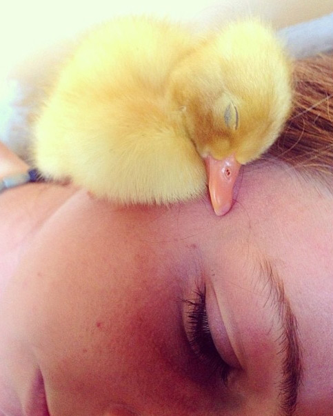 鴨鴨睡得太熟了,主人臉都快麻痺了.....