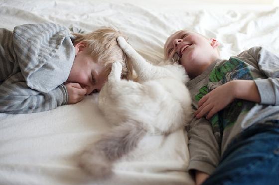 但是跟貓咪玩耍還是要拿捏安全距離,以防貓爪一伸刮傷小朋友啊!