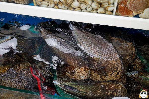 巨大的貝類!