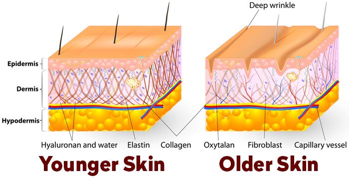UVA會破壞我們皮膚的膠原蛋白和彈力纖維彈性,使皮膚真皮受損