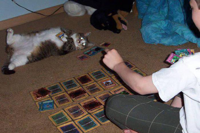 #3. 可以好好陪伴你的寵物「到你囉,還不趕快出牌~~!」喵星人:(瞪)