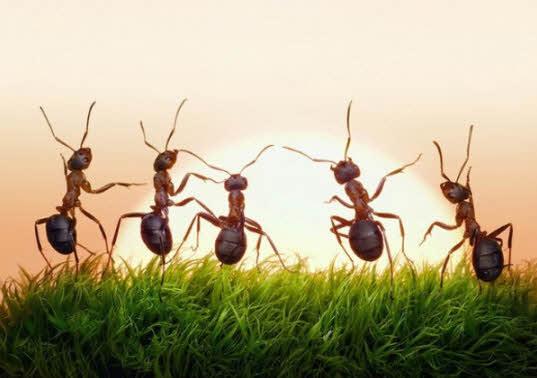 14. 家裡如果有螞蟻,在螞蟻出沒的地方撒上鹽就可消滅掉螞蟻。