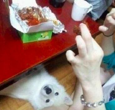 狗狗OS: 主人呀~也分我吃吧(盼望著)