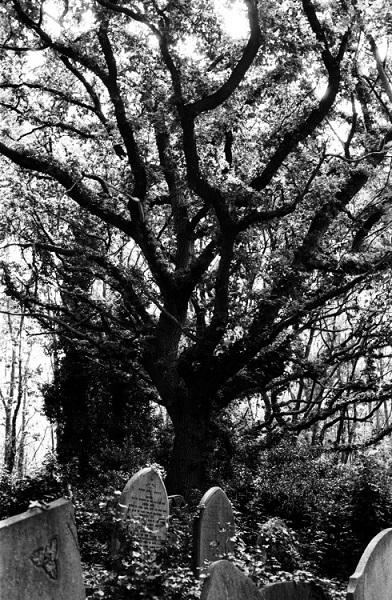 在你眼前有一棵高大的樹,還有後面矮小的一棵,你會選擇掛在哪一棵樹上? 1. 掛在大樹上 2. 掛在後面的小樹上