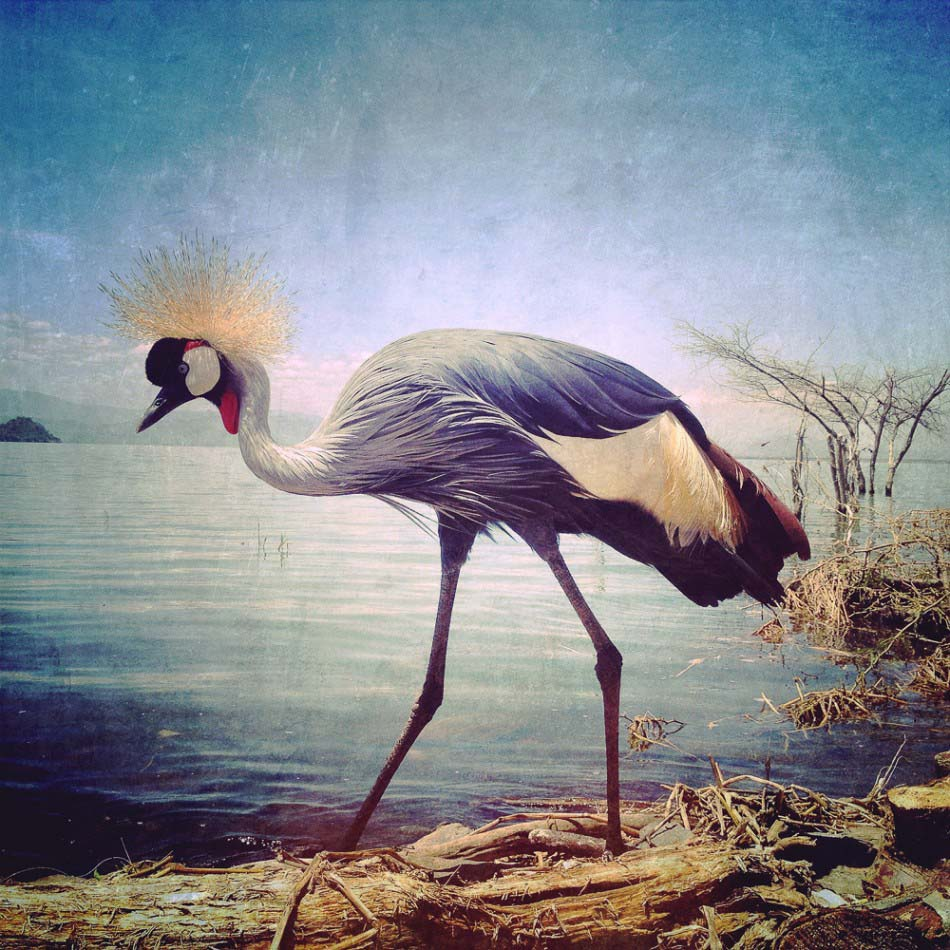 動物類 一等獎 攝影師 - Sephi Bergerson