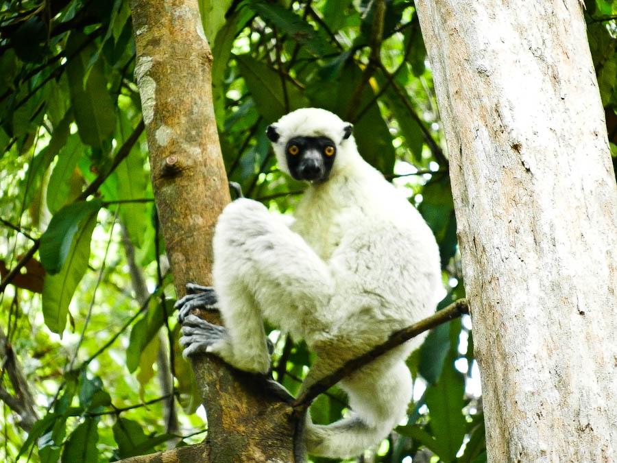 在這些岩石山脈中,生活著包括狐猴Lemur在內的各種珍稀動物..走進這裡,我們不僅可以欣賞到壯麗的自然景觀,還可隨處看到這些珍貴的生靈!