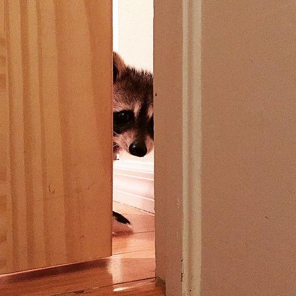 小浣熊一直在被發現的地方等馬麻,但是很長時間過去了,都沒有出現...TOT