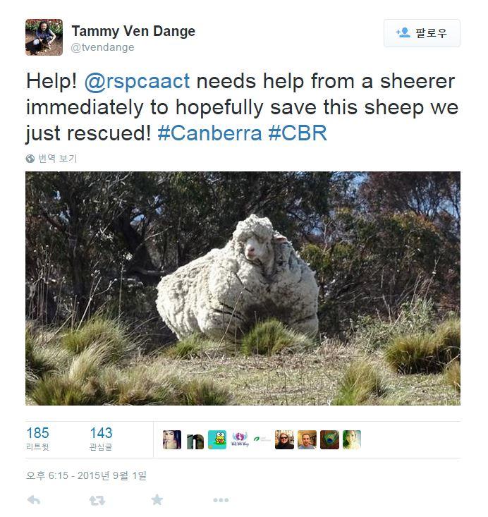 動物保護組織RSPCA負責人塔米·芬·丹傑還在在社交網路上尋求可以給克里斯剪毛的專家...(小編忍不住笑粗聲來,太萌了!)