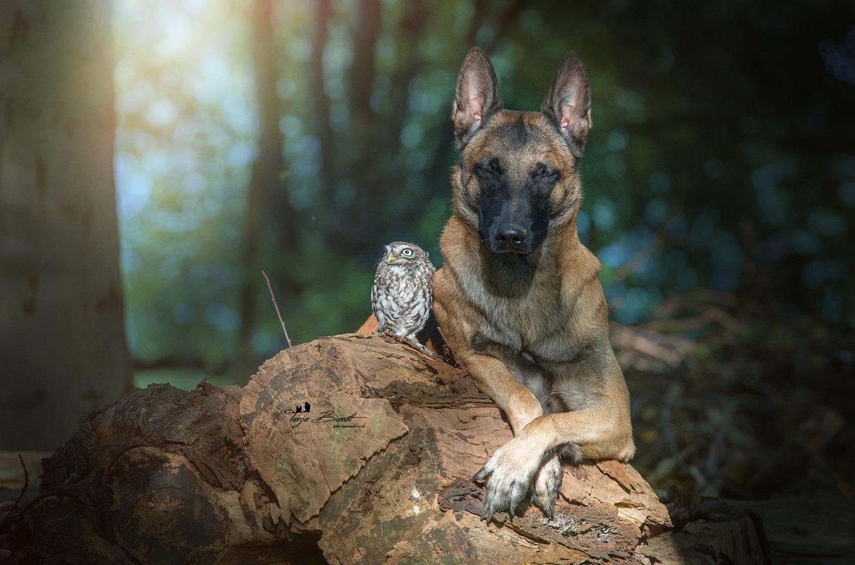 Tanja Brandt非常愛給自己的寵物拍照..... 兩種完全不相關的動物也能和諧相處,這也許就是命中註定吧!