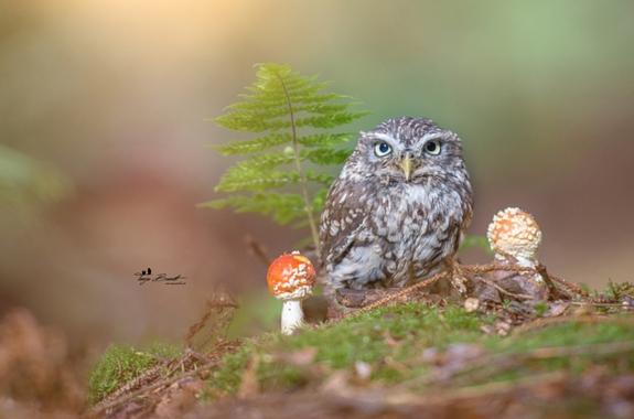 據悉攝影師為了能夠拍出好的照片,會經常與動物溝通, 難道正是因為她具備某種神秘的能力,才能拍出這樣的照片?!