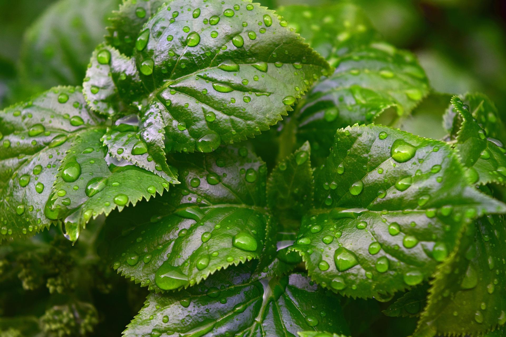 7.因為被雨浸濕 而變得色彩濃烈的自然世界 強烈的顏色對比與水珠的效果顯現的效果令人難忘