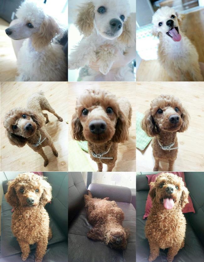 Kai的孩子們贊兒(짱아),是贊古(짱구)、萌古(몽구)都好可愛♥.♥