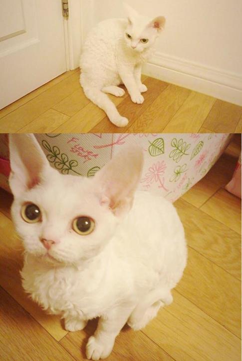 Sunny似乎真的很喜歡貓咪耶~除了Salt (소금)後來還多了Sugar (설탕)