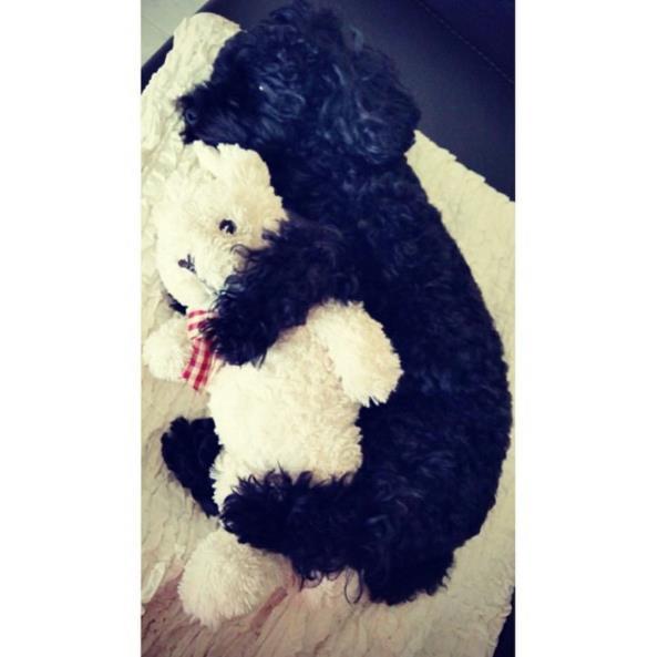 太妍也很常曬愛犬Ginger (진저)的照片,這張真的是萌翻了♥還抱個娃娃