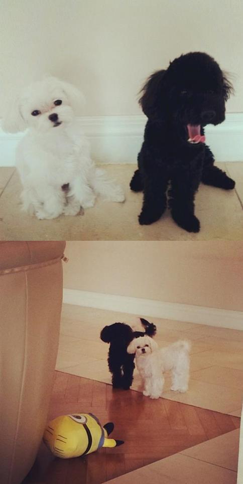 Tiffany的Prince也經常和Ginger一起合照XD反而更常去太妍instagram串門子的感覺 (?)