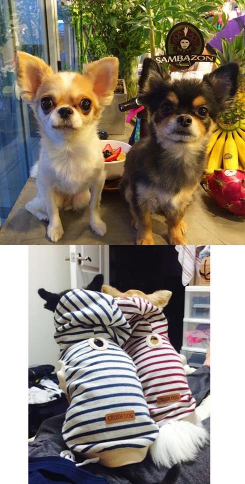 Amber還為了狗狗開設了另一個instagram帳號也太可愛XD這張是情侶概念 (?)