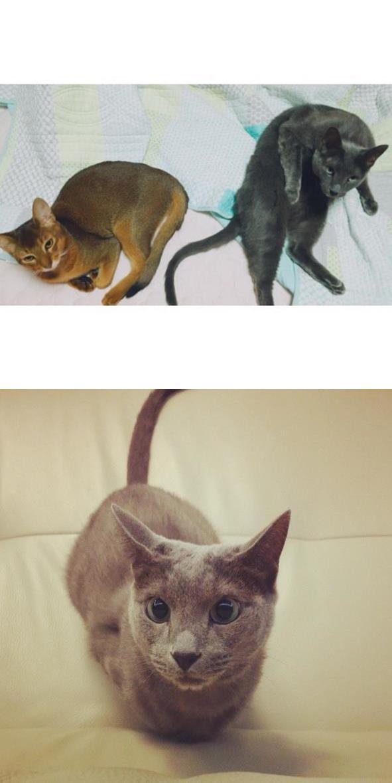 養了兩隻貓咪的希澈,常會自己幫兩隻愛貓HeeBum和Cherry加上對話互動XD希澈感覺也越來越有貓相(?)