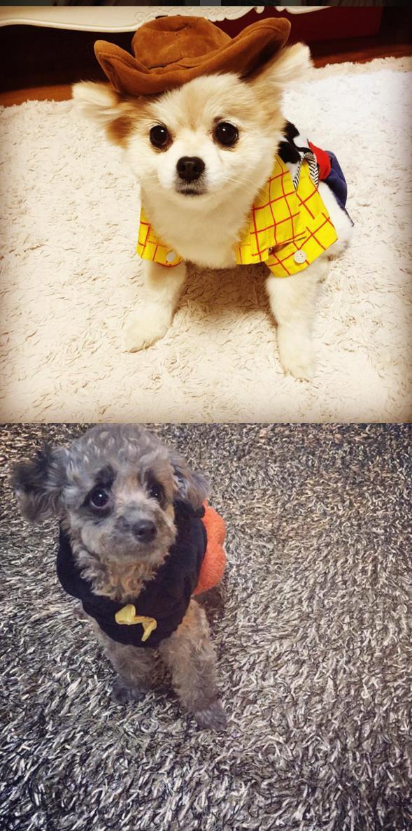 俞利還幫兩隻愛犬扮裝~也太可愛♥牠們也不能錯過萬聖節扮裝的意思