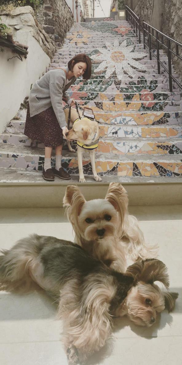 秀英似乎是養過最多的,Mori跟Cherry是拍畫報的概念無誤哈哈(゚∀゚)