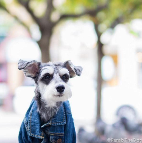 最近小編被友人告知在世界上有一隻狗狗比我還會穿衣服,自尊心受到了極大的傷害...不能我一個人桑心難過,我要來刺激刺激鄉民XDDD~