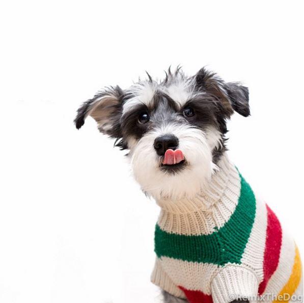 天氣涼了,主人給換了一身針織衫~