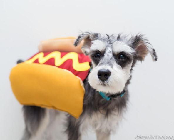 誰會那麼狠心吃下我這隻熱狗呢? ★不★敢★...怕被你咬XD