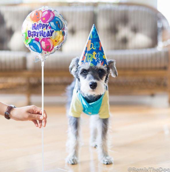 希望小狗狗永遠這麼可愛帥氣~~主人也能給予更更更多的愛,  也希望小狗狗能夠永遠健健康康♡小編還要跟你學搭配呢XD~