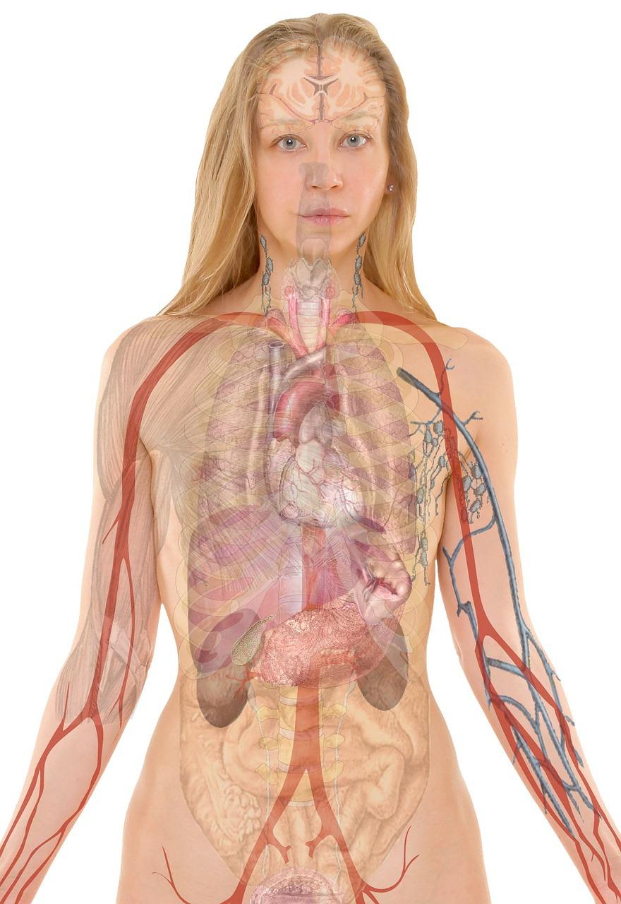 其中多酚有助改善腎臟功能 花青素有助預防泌尿道感染