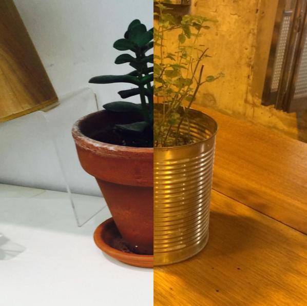 一樣有在養植物的兩人