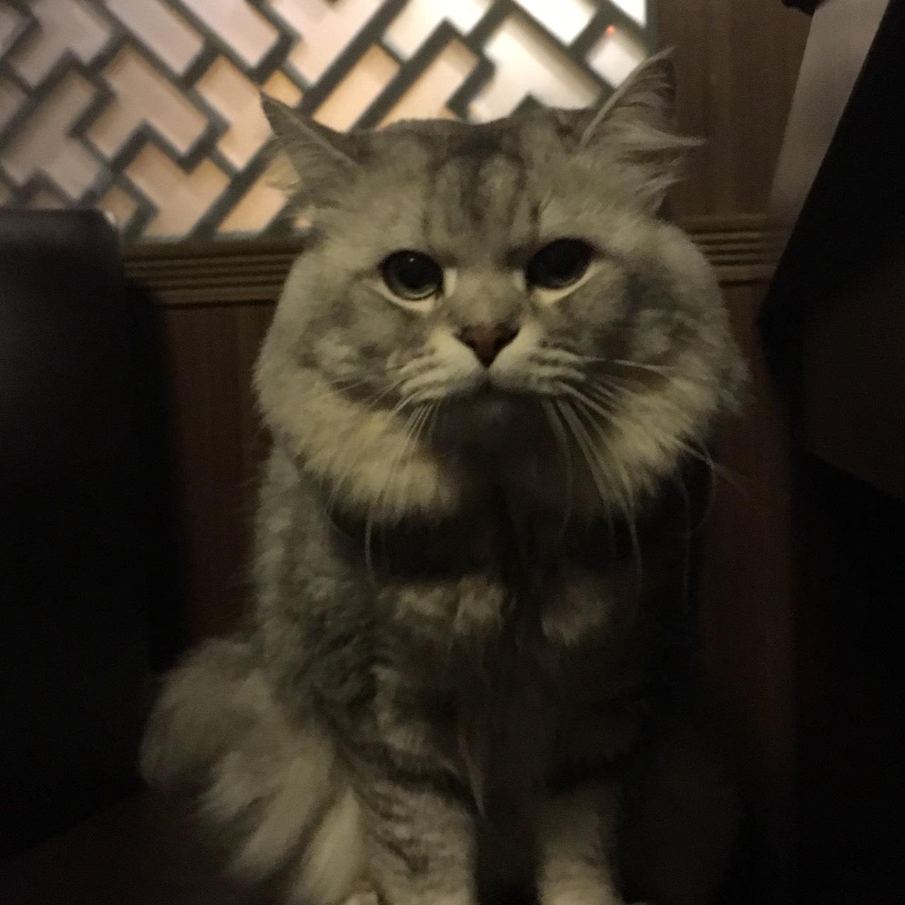 除了「멍스타그램」外,還有這個「펫스타그램(Pet + Instagram)」也是寵物專用的 tag。