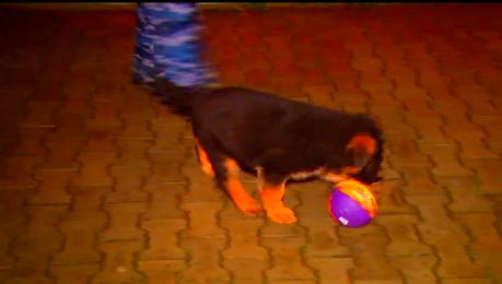 俄羅斯內政部官網還放上「多布雷尼亞」玩球的影片