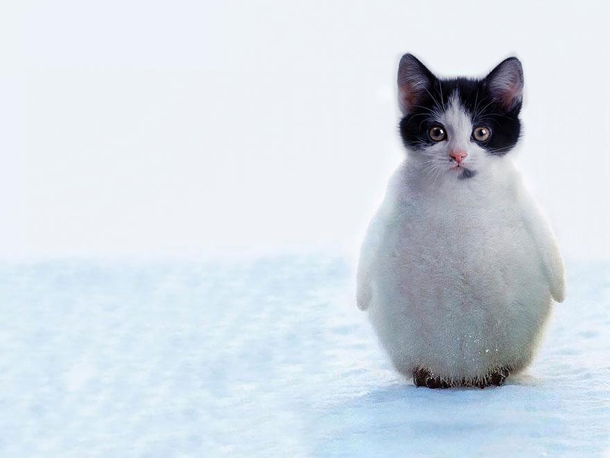 1. 企鵝貓(企鵝+貓咪)
