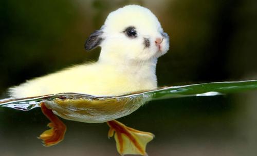 8. 兔鴨(鴨子+兔子)