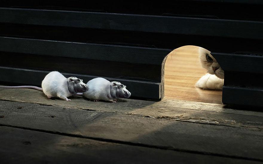 11. 鼠馬(老鼠+河馬)