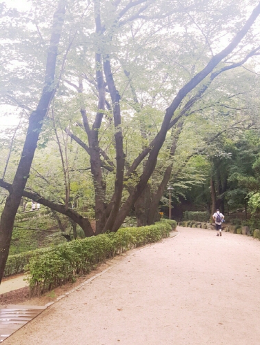 沿著林蔭道步行大約30分鐘,安山著名的櫻花路就會出現在你的面前。 一到春天,這裡便成了櫻花的海洋,是首爾市非常有名的賞櫻花勝地,3年前《紳士的品格》曾在這兒取景...
