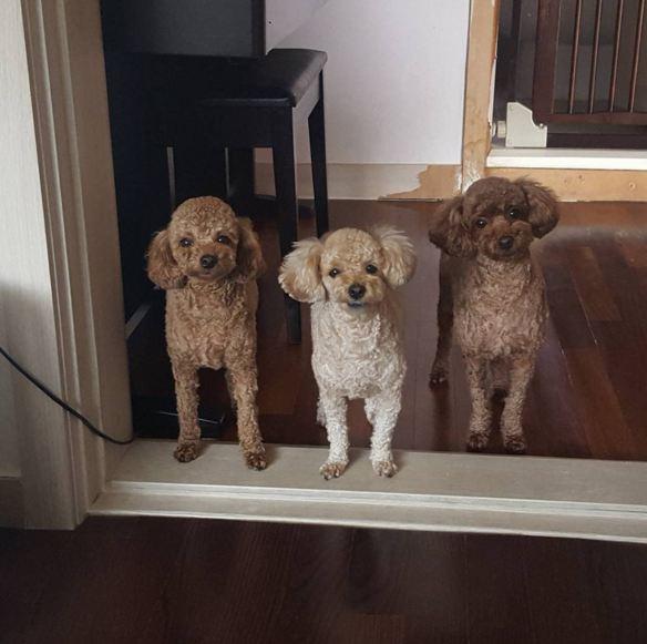 這是Hodu長大後的樣子 「大家好,我們是hodu,pie和公主」 實在是很想把他們撲倒摸肚肚啊!