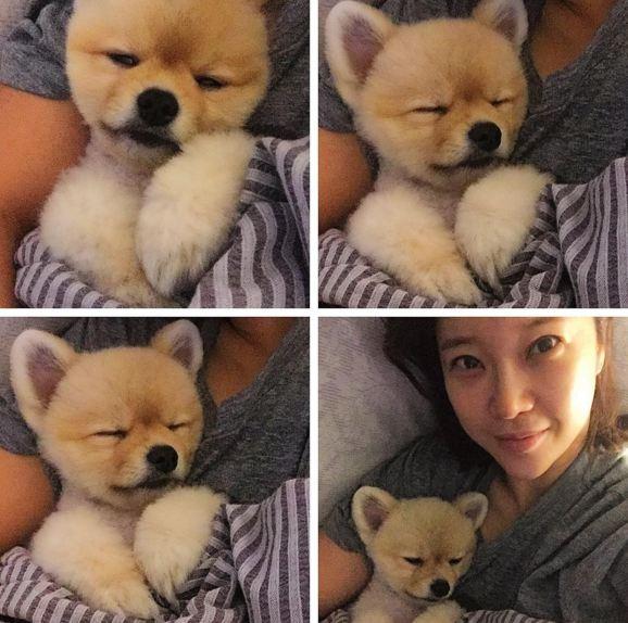 不是小編隨便拿娃娃照片合成來騙大家 是白智榮家的狗狗 就是這麼可愛啊!!
