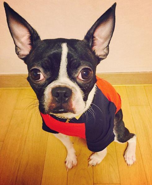 今年繼續蟬連全世界最美的女神AS的Nana家的狗狗 就Gomoo!名字很特別吧
