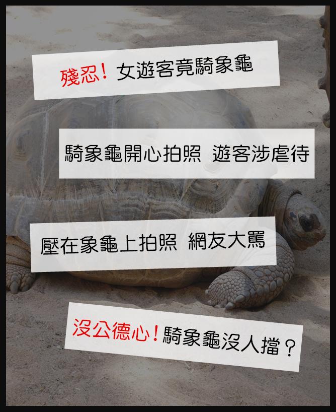 大家還記得嗎 前陣子,台灣南投有個女遊客為了拍照,竟然騎在象龜上