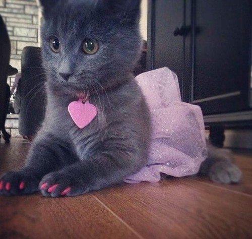 好有趣的主人...貓咪也愛塗指甲XD~