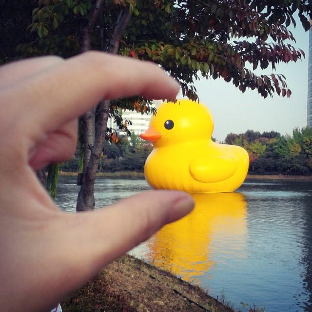 美妞們還記得這隻由荷蘭知名藝術家霍夫曼所設計的黃色小鴨吧?
