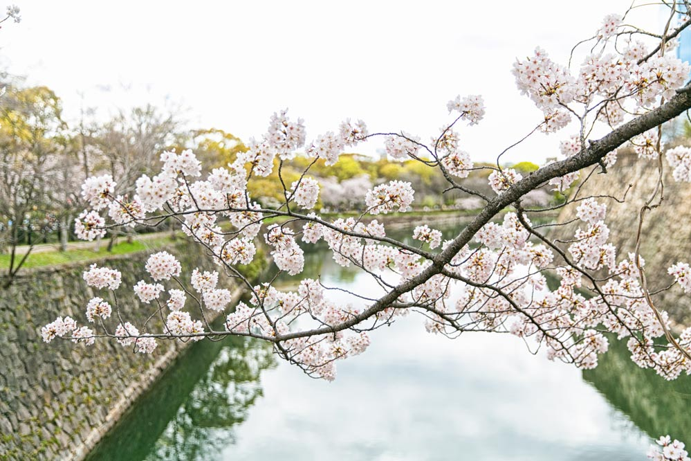 真的不騙大家,在三月底至四月初這期間去日本的話,走在路上都能看到很漂亮的櫻花喔~