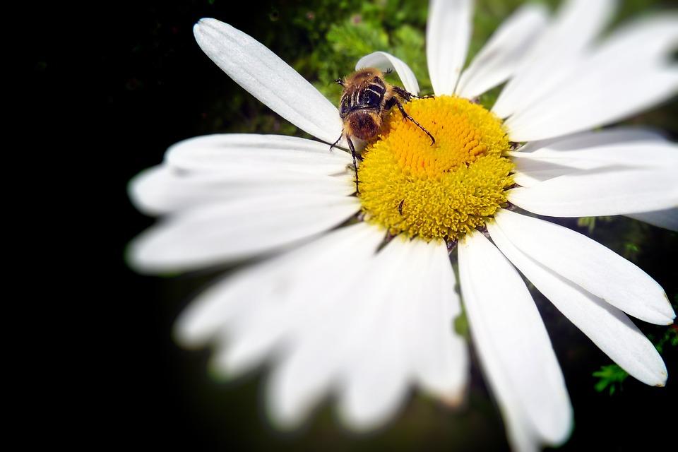 尤其是在拍攝花朵、小動物的時候, 除了可以把景物拍的好看,也記錄下了當時的心境!