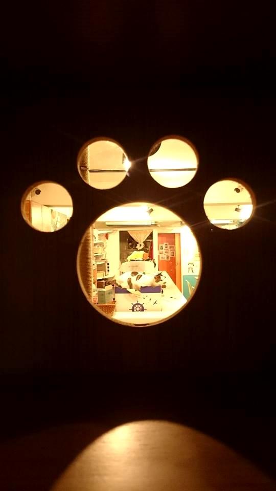 ➤摸摸貓咖啡館 ➤新北市蘆洲區中山一路61巷11號