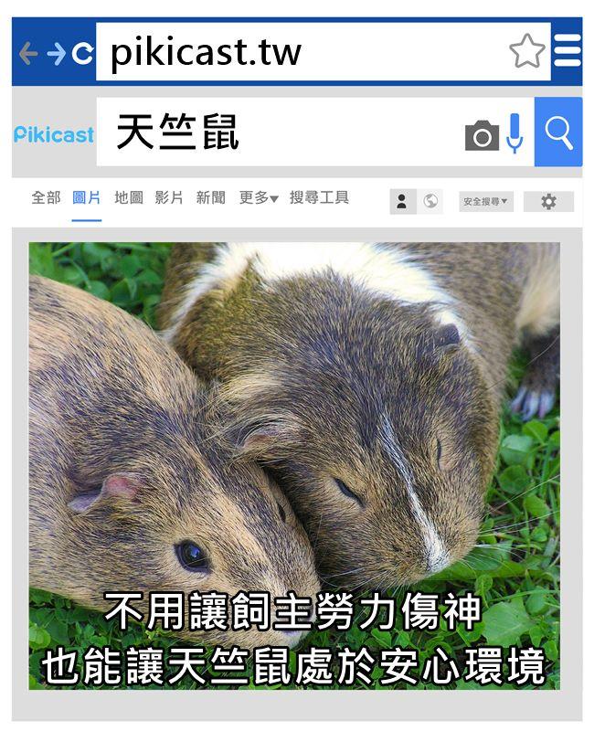 有很快交還的,也有長期被留下來的天竺鼠 只要曾租借過,便會被Küng留下來或是提供更好環境,不會被重複租借