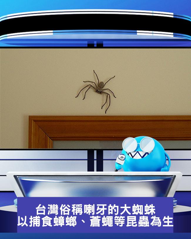 喇牙的本名叫白額高腳蛛