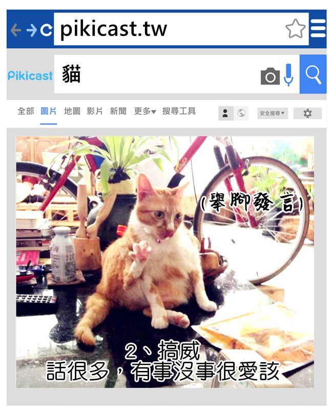據周圍橘貓貓奴表示;「真的很愛講話跟鬧鐘一樣~」「沒看到人要叫、吃飯要叫、晚上也要叫」另外有貓奴提供意見:「黑貓也很吵欸」
